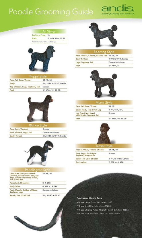 Andis UltraEdge Detachable Blade #40 Poodle Grooming Guide
